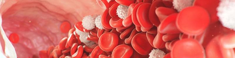 red blood stream